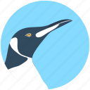 bird, hummingbird, puffin, toucan, zoology icon