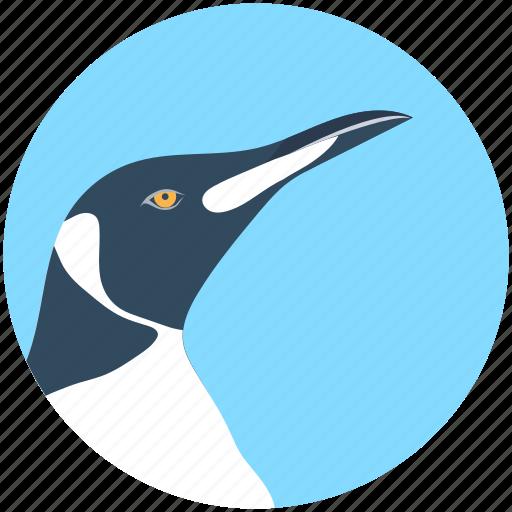 bird, hummingbird, puffin, toucan, zoology icon