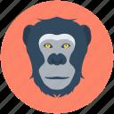 animal, baboon, gorilla, macaque, monkey