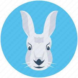 animal, kangaroo, kangaroo joey, orycteropus afer, wallaroo icon