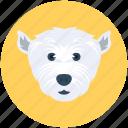 wild animal, polar bear, animal, bear, zoo