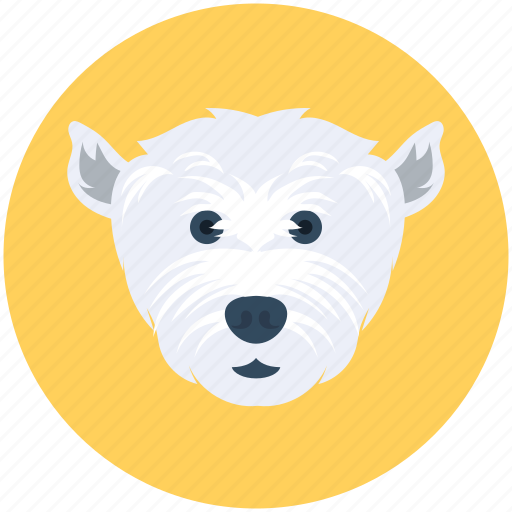 animal, bear, polar bear, wild animal, zoo icon