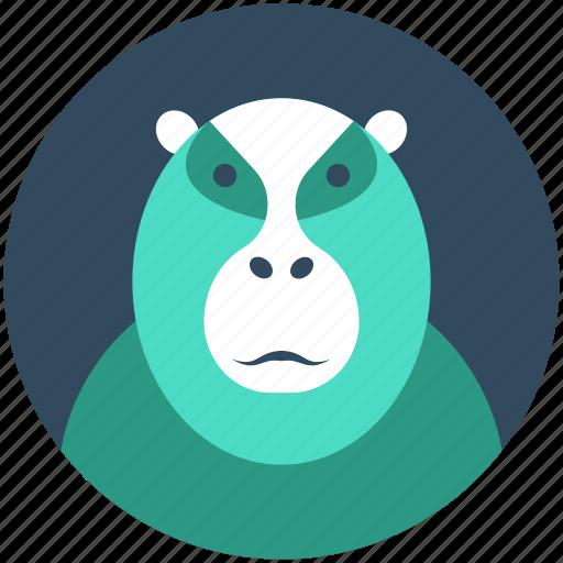 ape, baboon, gibbon, gorilla, hominoidea icon