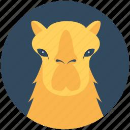animal, bactrian camel, camel, desert animal, mammal icon