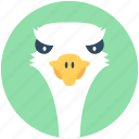 bird, common ostrich, emu, ostrich, zoo icon