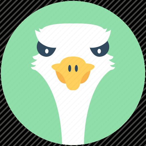 bird, common ostrich, emu, ostrich, zoo icon