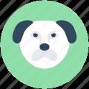 panda bear, panda face, giant panda, panda, animal