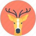 elk, reindeer, deer, animal, reindeer head