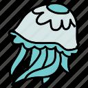 animals, aquarium, jellyfish, ocean, sea, sting