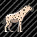 animal, hyena, wild icon