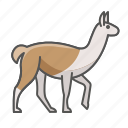 animal, lama, llama, wild