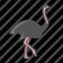 animal, ostrich, wild icon