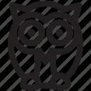 animal, animals, nature, night, owl, pet, zoo