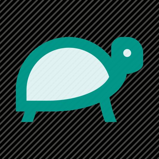 ocean, reptile, sea, sea turtle, tortoise, turtle icon
