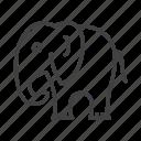 elephant, wild, zoo icon