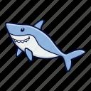 animal, ocean, sea, shark