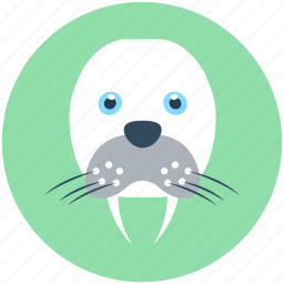 animal, aquatic mammal, morsa, sea cow, walrus icon