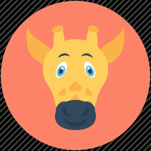 animal, camelopard, giraffe, mammal, wildlife icon