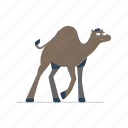 animals, camel, desert, nature, wildlife, animal