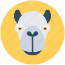 hippo, safari, wild hippo, wildlife, zoo icon