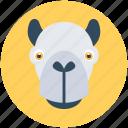 hippo, wild hippo, wildlife, safari, zoo icon