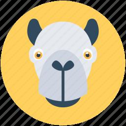 hippo, safari, wild hippo, wildlife, zoo icon