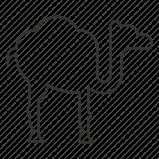 animal, camel, desert, sand, zoo icon