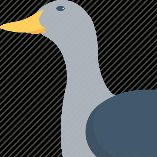 bird, domestic fowl, duck, goose, stork icon