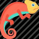 lizard, gecko, reptile, animal, chameleon