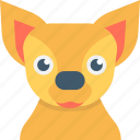 animal, fennec, fennec fox, mammal, wild animal icon