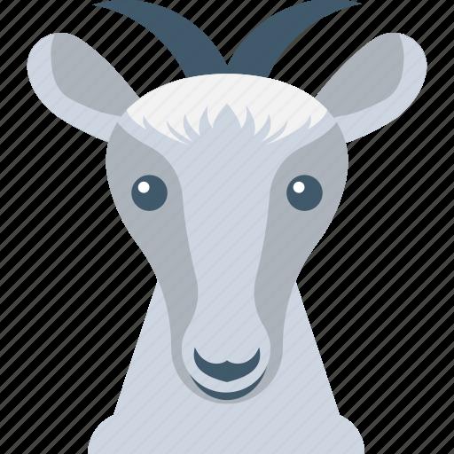 animal, antelope, chamois, mouflon, mountain goat icon