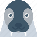 animal, aquatic mammal, morsa, sea cow, walrus icon