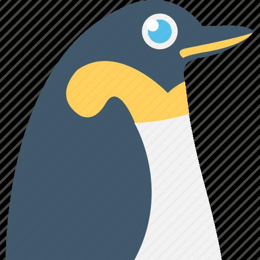 animal, auk, emperor penguin, penguin, puffin icon