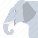 animal, elephant, mammal, pachyderm, zoo icon