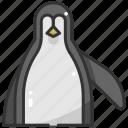 animal, bird, nature, penguin, wildlife, zoo