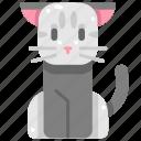 animals, breed, cat, cute, kitty, mammal, pet icon