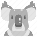 animals, head, koala, mammal, marsupial, wildlife, zoo