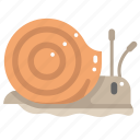 animals, shell, slow, slug, snail, wildlife