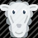 animal, pet, sheep, wild