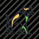 cat, domestic, kitten, pet icon