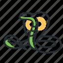 cobra, reptile, snake, venomous icon
