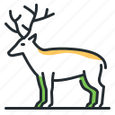 antlers, deer, forest, animal icon