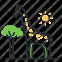 african, animal, giraffe, zoo