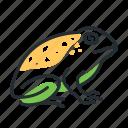 amphibian, animal, species, toad icon