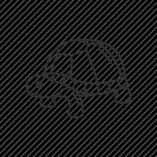 Animal, marine turtle, pet, reptile, sea, sea turtle, turtle icon - Download on Iconfinder