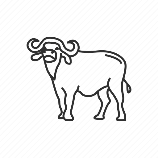 Africa, animal, bison, buffalo, bull, mammal, yak icon - Download on Iconfinder
