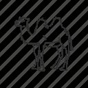animal, camel, desert, egypt, travel, zoo