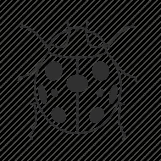 beetle, bug, dots, emoji, insect, lady, lady bug icon