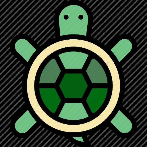 animal, pet, turtle, wild icon