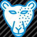 animal, leopard, pet, wild icon